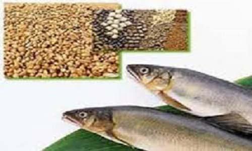 خوراک ماهیان گرمابی و سردآبی