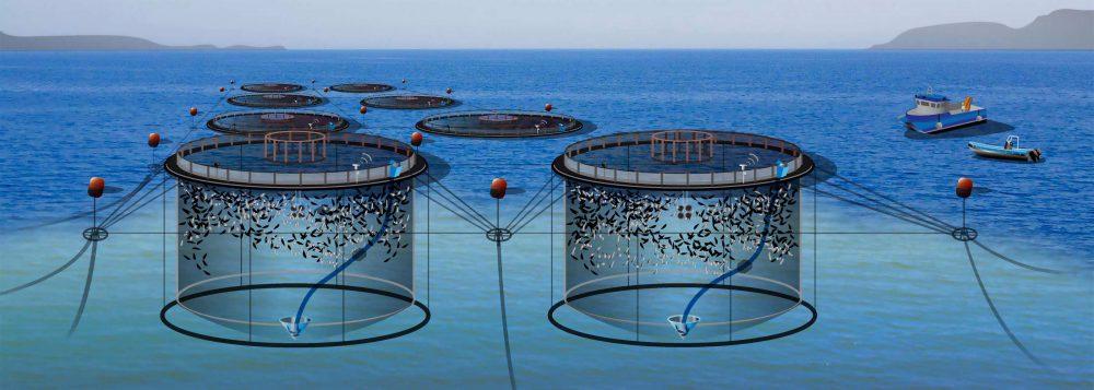 باکیفیت ترین قفس پرورش ماهی